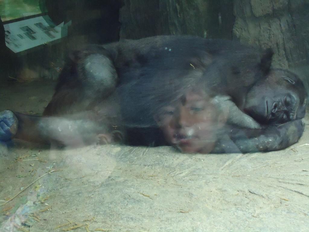 Corbin at Bronx Zoo