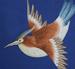 squarebird